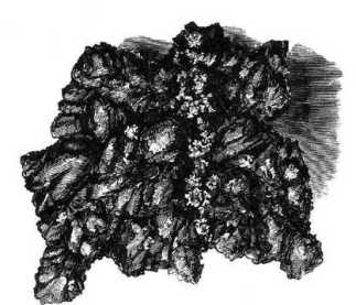 In Robert Brough Smythes report contained in appendix F in his 1869 book: Goldfields and Mineral Districts of Victoria the nugget is shown upside down to this, which creates arguments about the shape. When Francis Fearn's drawing is seen as shown here, similarities to Webber's sketch then become apparent.