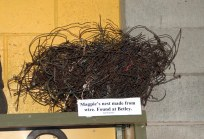 Magpie nest. Criteria for the museum is firstly, is it relevant to the district or is it interesting? We have lots of unusual items.